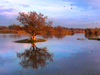 Wetlands of Emporda - Costa Brava Video